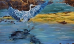 Heron36x36