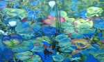 Monets_Lilies